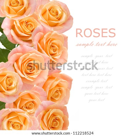 Wedding tea roses background isolated on white with sample text - stock photo