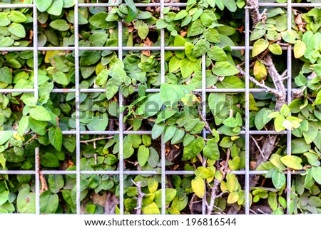 Weed vines trapped behind a metal grid fence
