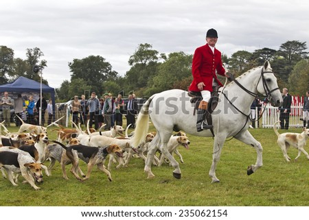 WEEDON, UK - AUGUST 28: Members of a local fox hunt parade the hounds and horses around the arena before inviting the public in to play with the dogs at the Bucks show on August 28, 2014 in Weedon - stock photo