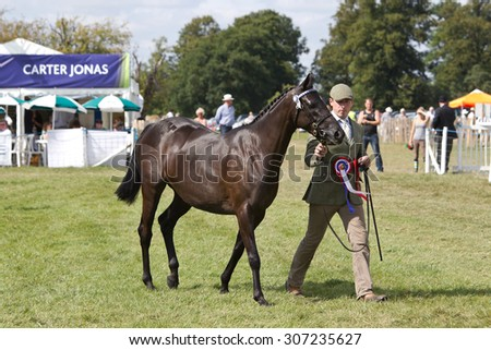 WEEDON, UK - AUGUST 29: One of the champion horses is walked around the arena for the judges to decide which horse should be named Grand Champion at the Bucks County show on August 29, 2013 in Weedon.