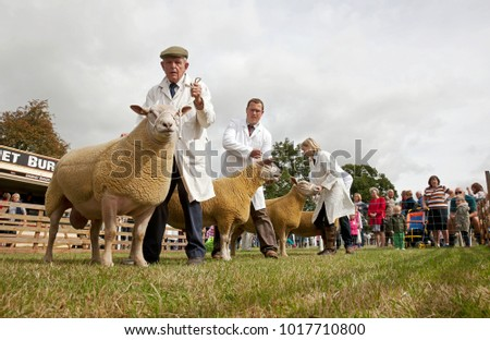 WEEDON, UK - AUGUST 28: Owners & sheep line up in front of the judge to find out which animal has been selected as the winner of this competition at the Bucks County Show on August 28, 2014 in Weedon
