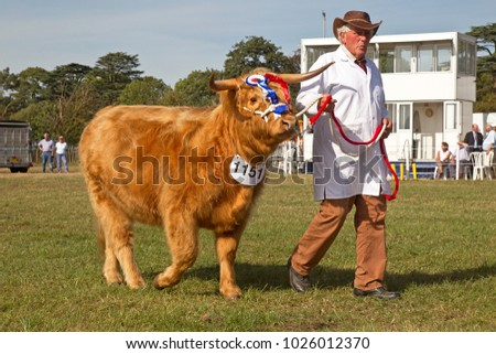 WEEDON, UK - SEPTEMBER 1: A champion Highland cattle is led around the main arena by its owner during the Grand Livestock parade at the Bucks County Show on September 1, 2016 in Weedon