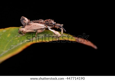 weevil attacked by mites