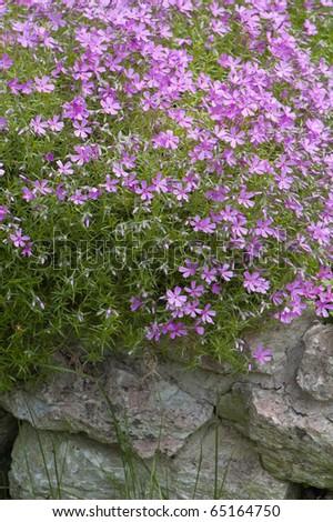 Well-groomed spring garden - stock photo