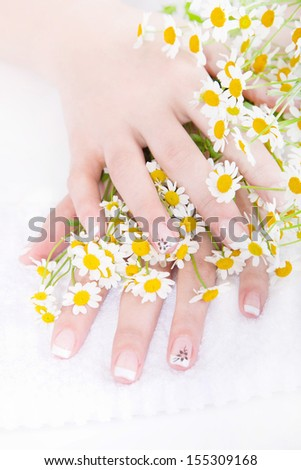 Well-kept fingernails with chamomile - perfect nails with manicure - stock photo
