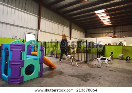 Pet boarding stock images royalty free images vectors for Red dog daycare