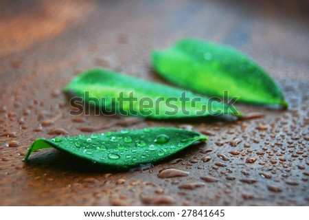 wellness and bath concept with leaves and water drops on wood