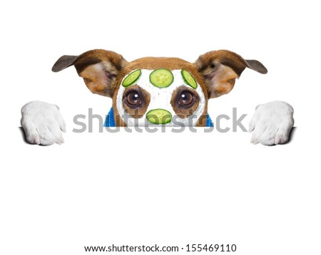 wellness dog behind banner with a cucumber mask - stock photo