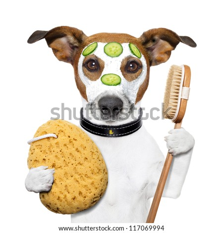 wellness spa wash sponge dog - stock photo