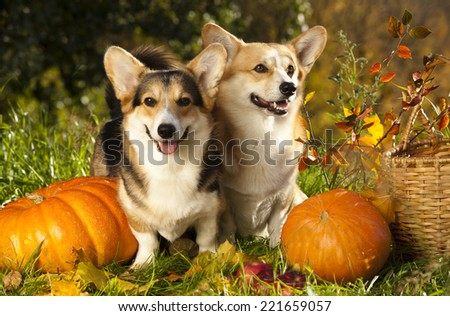 Dog Pumpkin Stock Images Royalty Free Images Amp Vectors