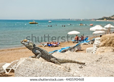 West Beach of Side, Turkey, and the lizard - stock photo