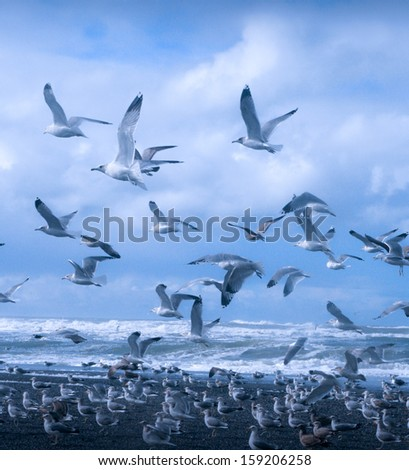 West Coast seagulls in flight by the sea in waves - stock photo