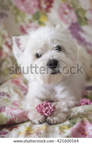 West Highland White terrier with flower