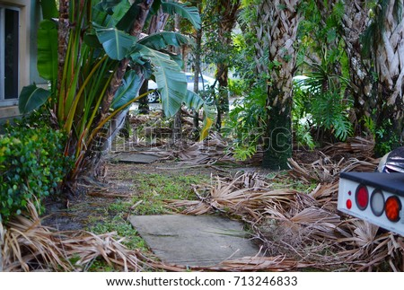 WEST PALM BEACH, FL - September 11, 2017:Aftermath of Hurricane Irma in a small neighborhood in south Florida. Showing no damaged property, but the effects of many downed branches and trees.
