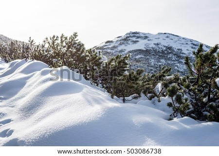 western carpathian mountain tops in winter covered in snow on a sunny day. slovakia