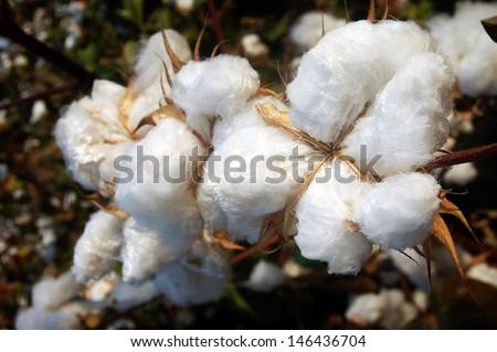 A Sample Cotton Ginning Business Plan Template