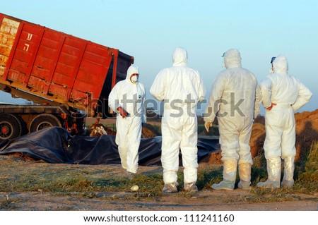 WESTERN NEGEV, ISRAEL- MARCH 18: Agriculture Ministry are burying the carcasses of dead turkeys due to Bird Flu outbreak at Kibbutz En Hashlosha in the western Negev, Israel on March 18, 2006. - stock photo