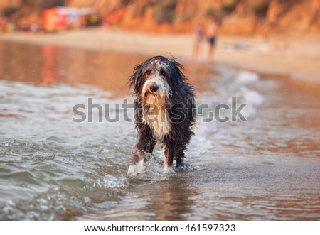 Wet and tired dog on a beautiful beach