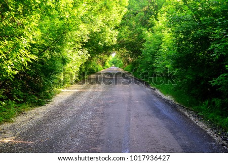 Wet asphalt after rain in puddles. Road, tunnel of trees. Foliage, summer, beautiful landscape and background