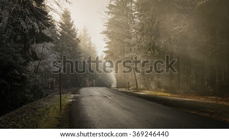 Wet, asphalt forest road in winter foggy day.
