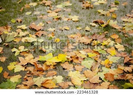 Wet Autumn Background - stock photo