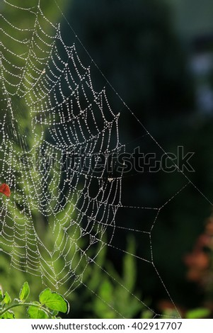 Wet beautiful spider web on a dark background