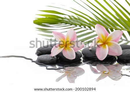 Wet black stones and two frangipani and palm leaf background - stock photo