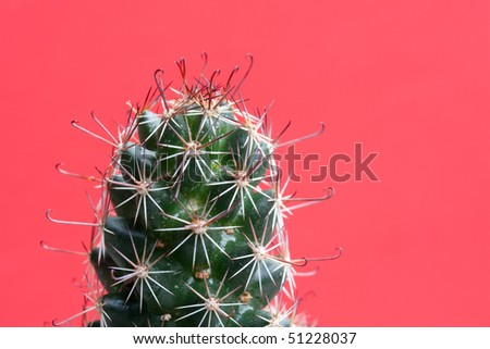 Wet cactus on red background - stock photo