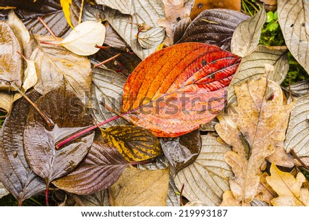 Wet, colored leaves lying on the ground.