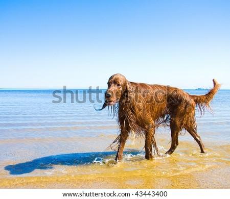 wet dog - stock photo