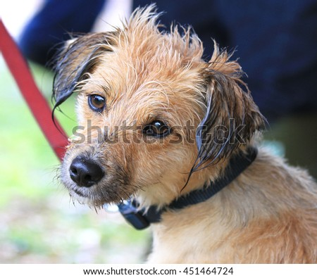Wet dog face - stock photo