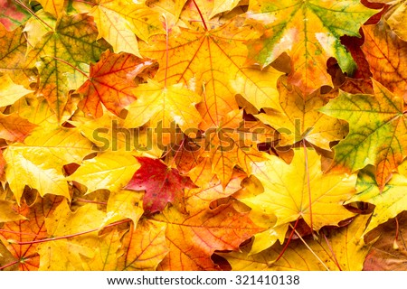 Wet fall leaves for an autumn background - stock photo