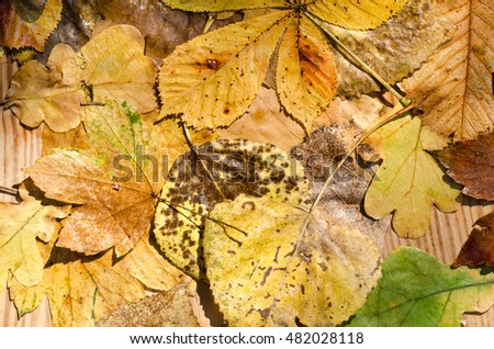 wet fall leaves on wooden background