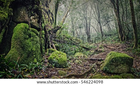 Wet forest with green moss and big stones, Mahe island, Seychelles