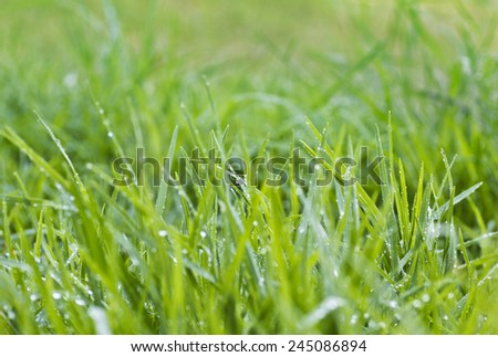 wet grass - stock photo