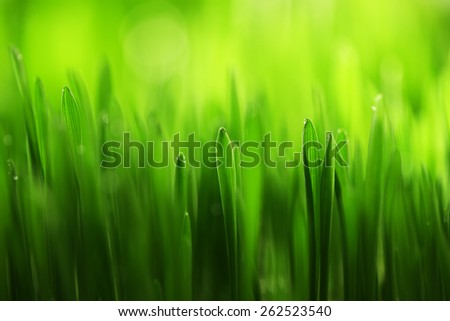 Wet grass close-up background - stock photo