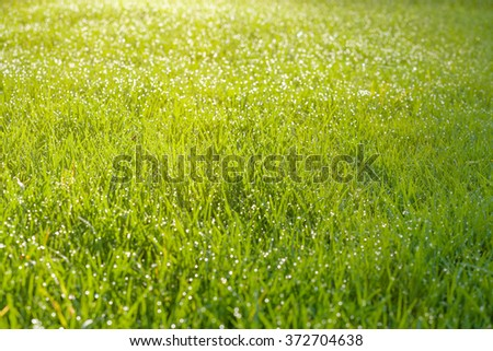 Wet grass field with dew drops bathing in morning sunlight. Shallow depth of field - stock photo