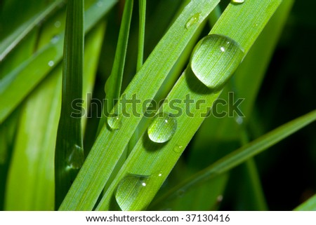 Wet Grass - Up Close