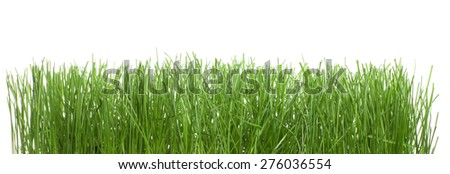 Wet green grass isolated on white background - stock photo