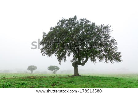 Wet Landscape With Lonely Tree in Morning Fog, winter Portugal - stock photo