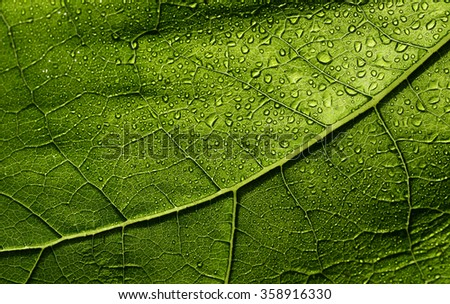 Wet leaf bright green - stock photo