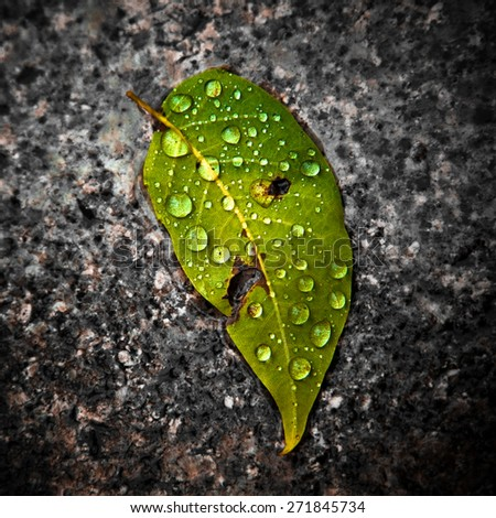 Wet leaf on the ground - stock photo