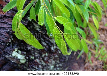 Wet leaves after the rain. - stock photo