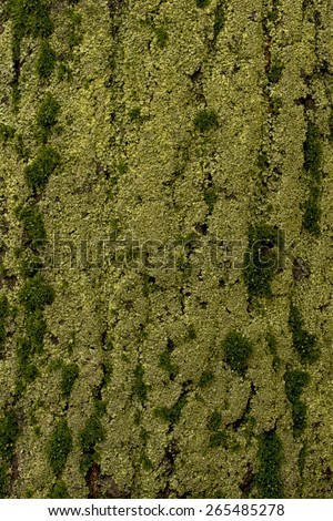 Wet moss on the tree bark, background - texture pattern, for designers - stock photo