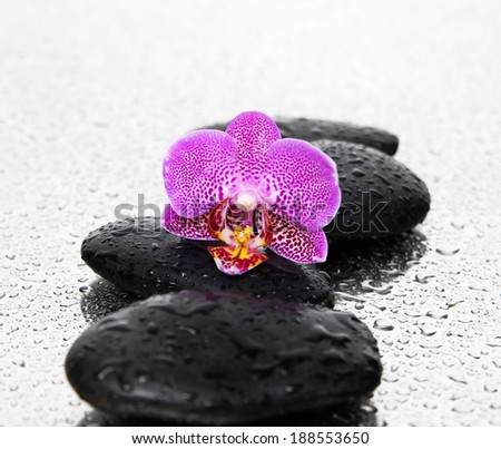 Wet pebble stones with black orchid