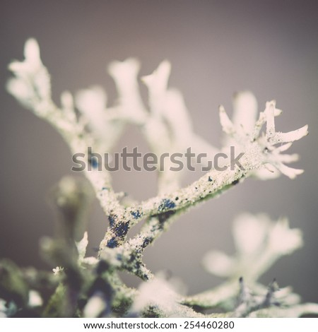 wet plant branches in winter forest with water drops and blurred background - retro vintage effect