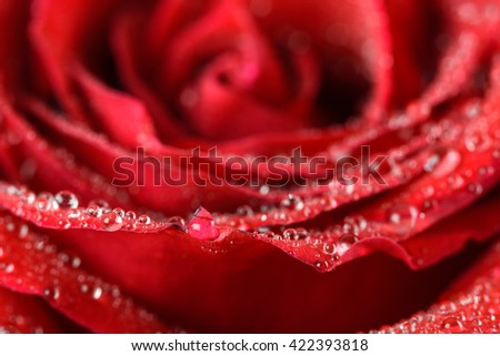Wet Red Rose Close Up With Water Drops - stock photo