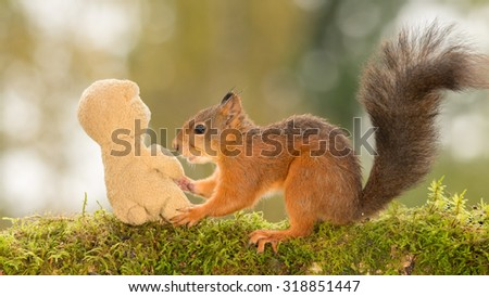 wet red squirrel holding a bear