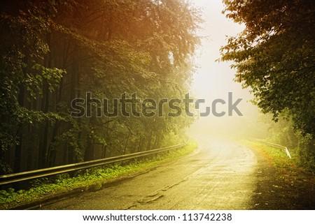 wet road in fog - stock photo