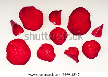 Wet Rose petals on a white background